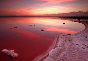 Zwemmen in een Roze Zoutmeer